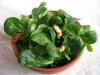 salade-de-mache