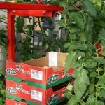 Récolte en cours à Bouguenais